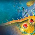 Science-publicatie TU Delft over eeuwige oorlog tussen bacterie en virus