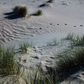 Sea level rise outpaced by vertical dune toe translation on prograding coasts